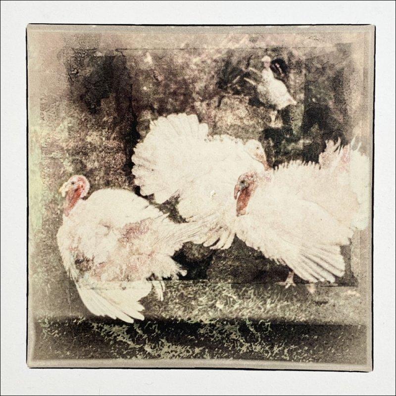 Turkeys_Purell gel transfer Arches 88