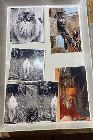 14 Devora Selphy prints soaking in tray