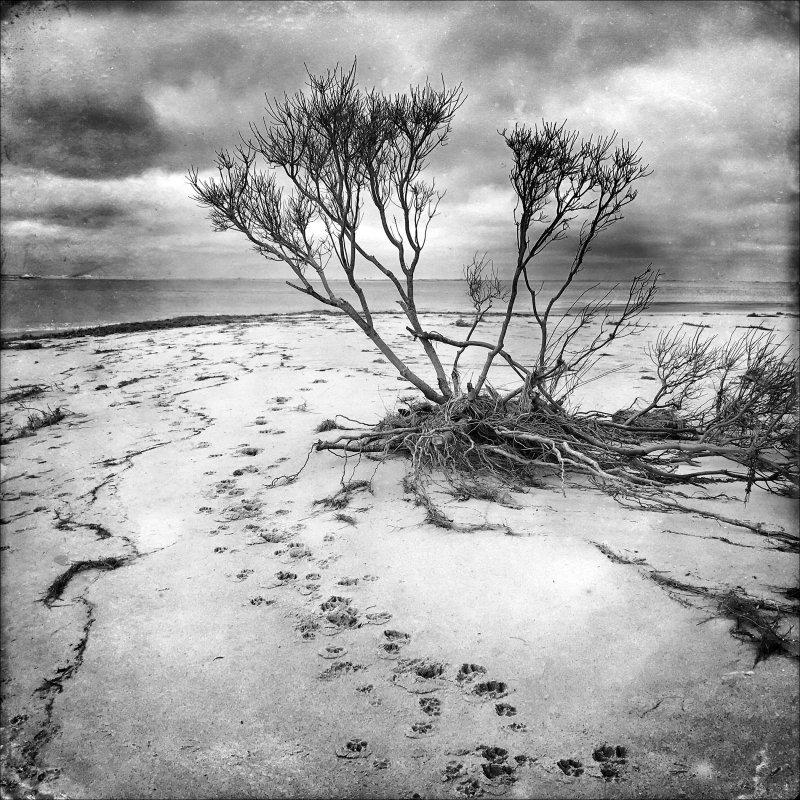Barrier Beach Erosion #1