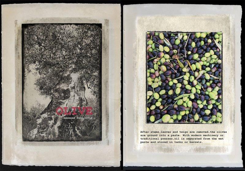 Olive for website