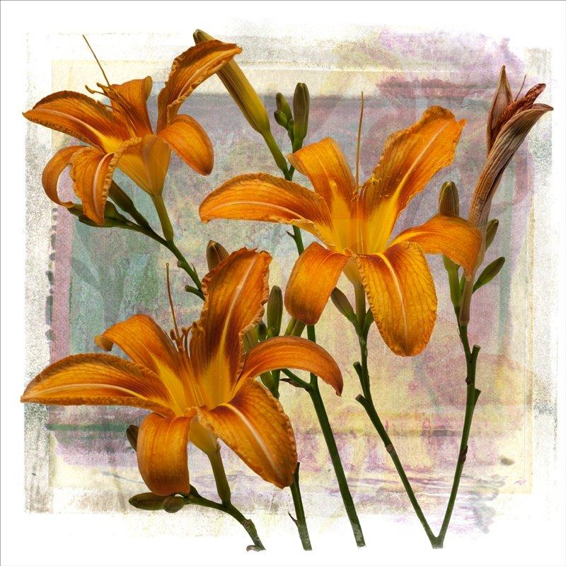 Roadside lily