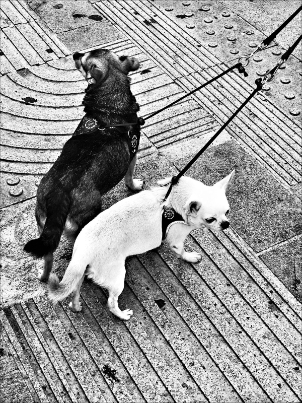 Un cane nero e un cane bianco