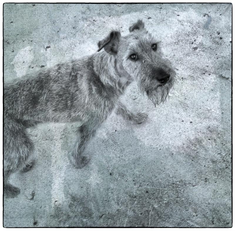 Dog Walk #5