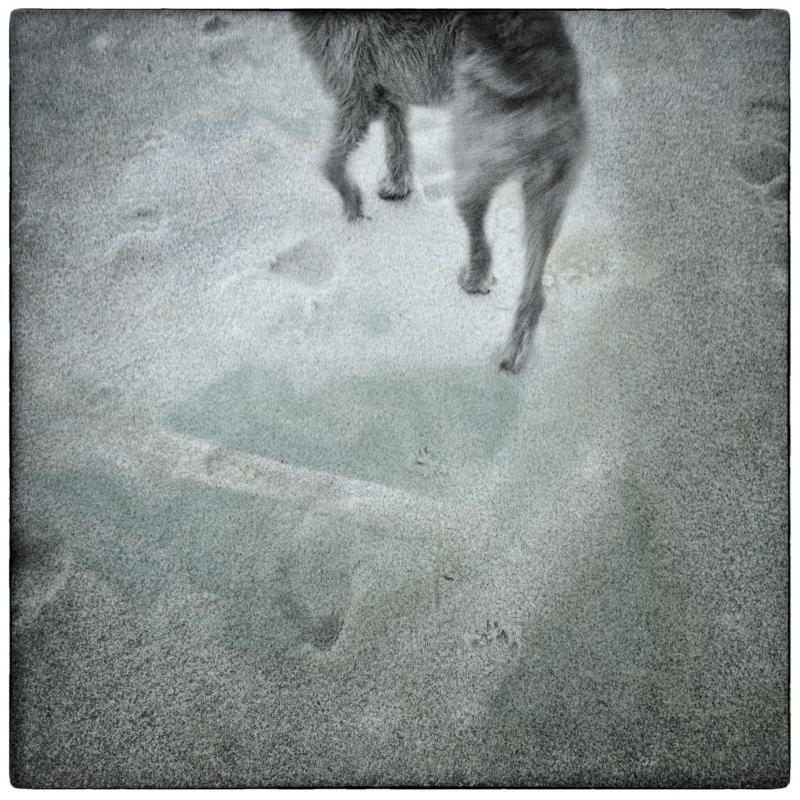 Dog Walk #2