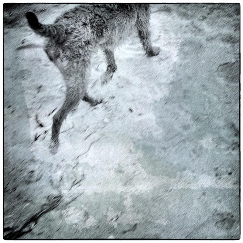 Dog Walk #7