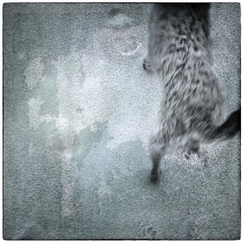 Dog Walk #3