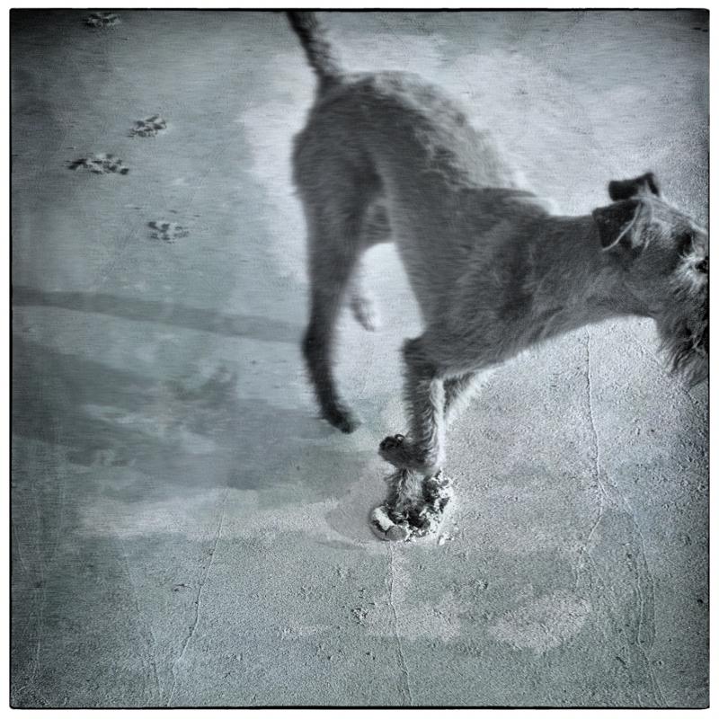 Dog Walk #6